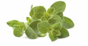zioła przeciwgrzybicze
